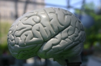 Changes Associated with Aging in a Healthy Brain vs. a Brain with Dementia