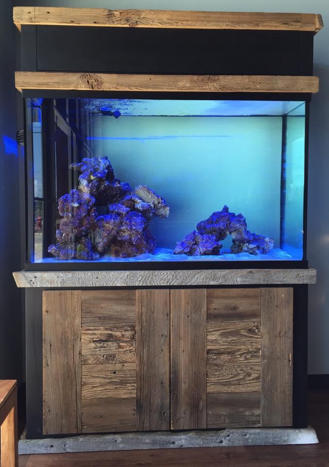 Custom Aquarium Installation Jackson Fish And Coral