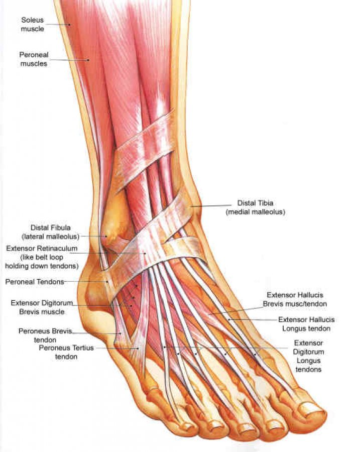 Anklefoot Conditions Procare Rehabilitation